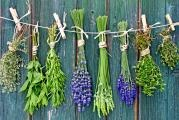 Harvest time: How and when to harvest home-grown herbs?